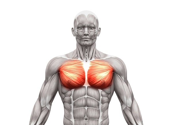 Diagram of the pectoralis major, one of the main muscles that engage during push-ups
