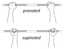 The difference in pronated and supinated grip in your bodyweight bicep exercises