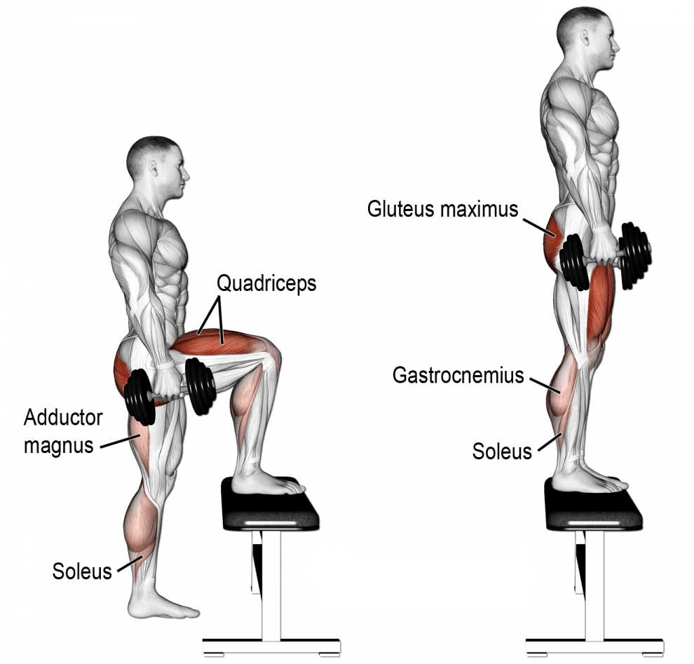 Diagram showing the muscles worked by the step-up exercise