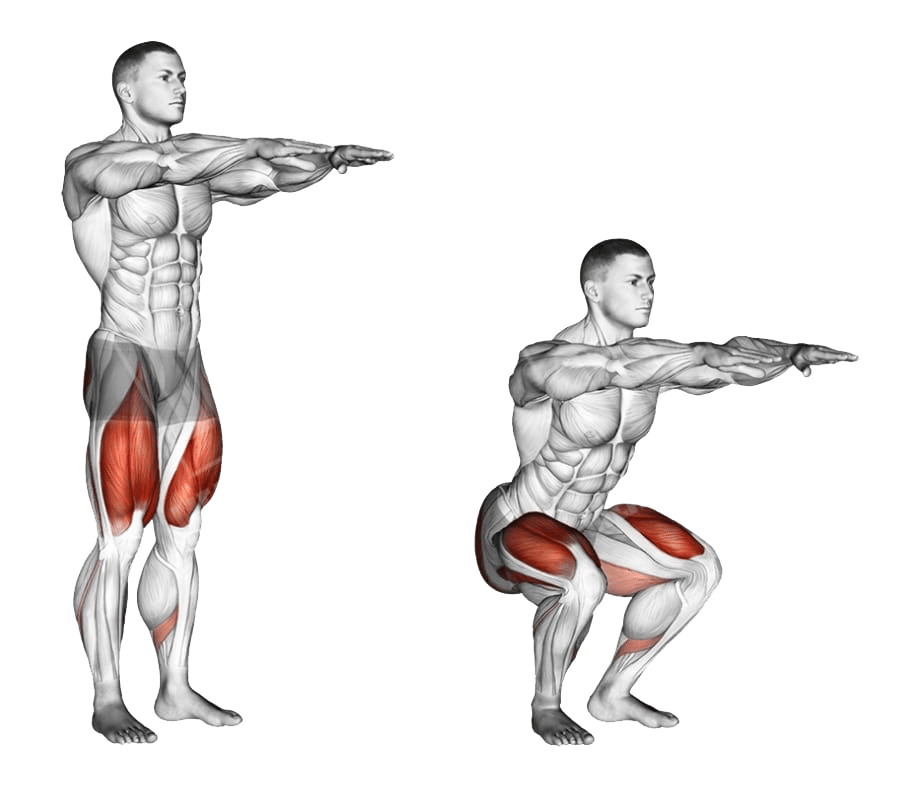 Diagram showing the muscles worked in a bodyweight squat
