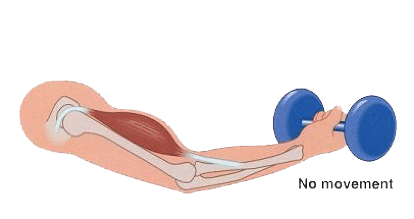Diagram of an isometric muscle contraction, one of the most important in a calisthenics workout