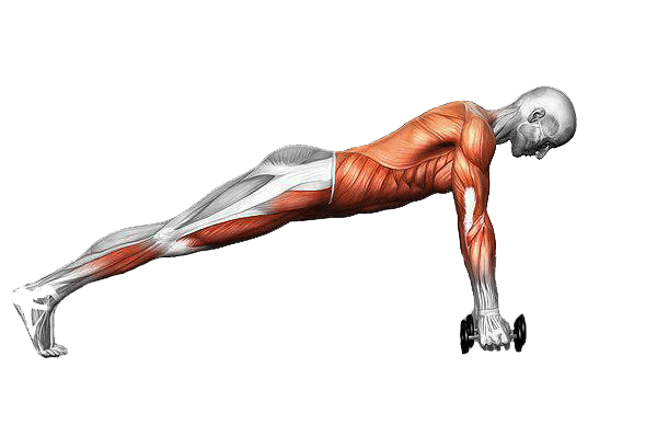 Diagram of the muscles that work to stabilize your body during a push-up